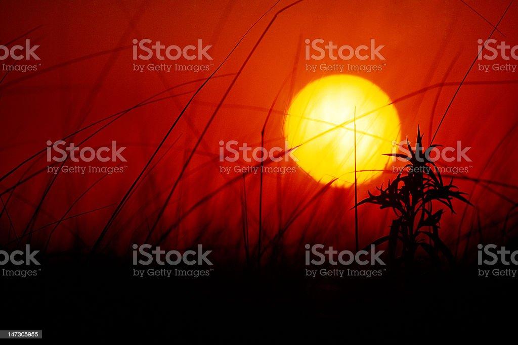Sunset over dune grass stock photo
