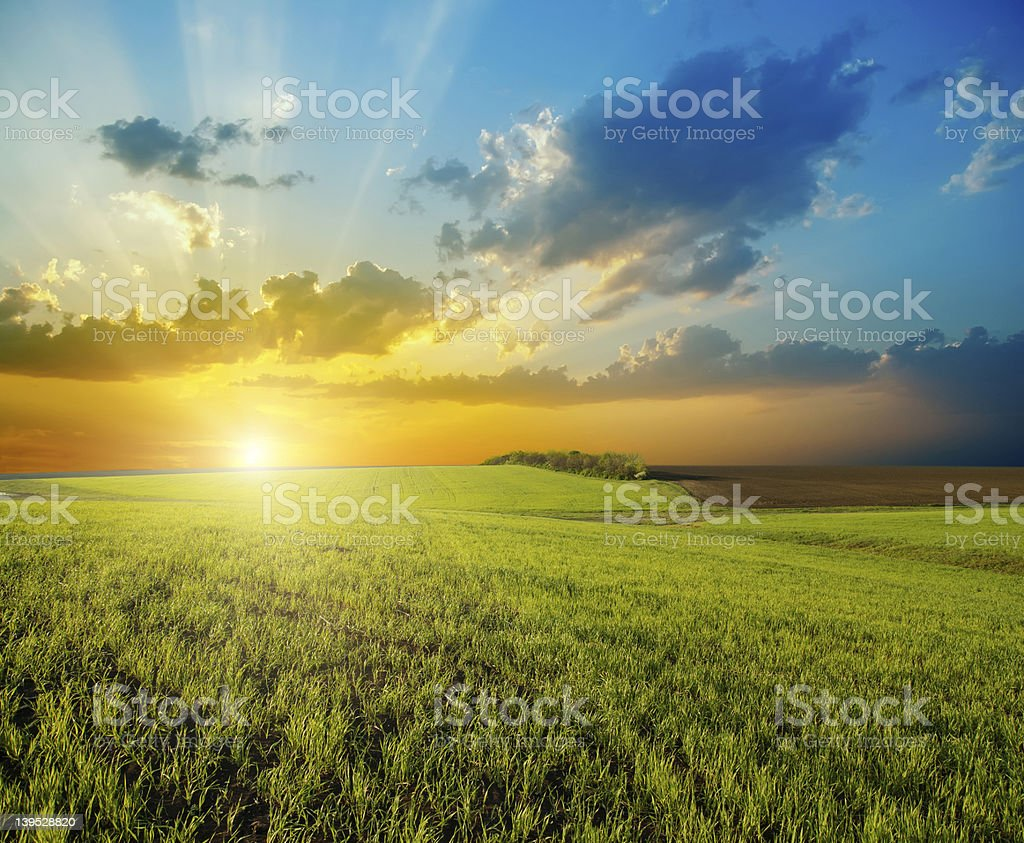 Sunset over expansive green field stock photo
