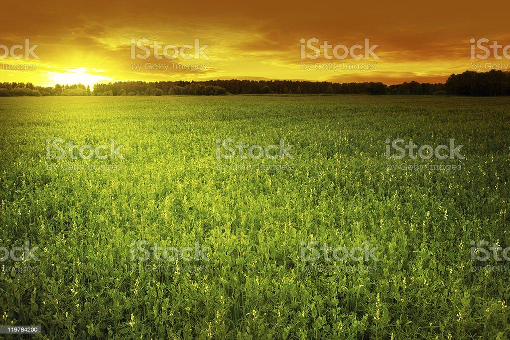 Sunset over field. stock photo