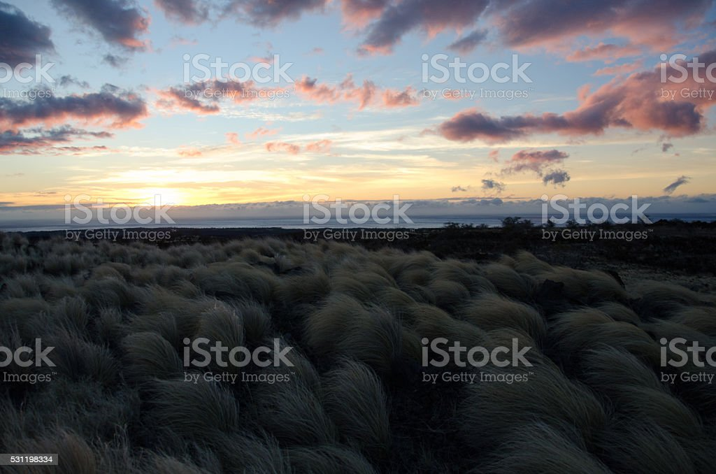 Sunset over fountain grass field next to Waikoloa road stock photo