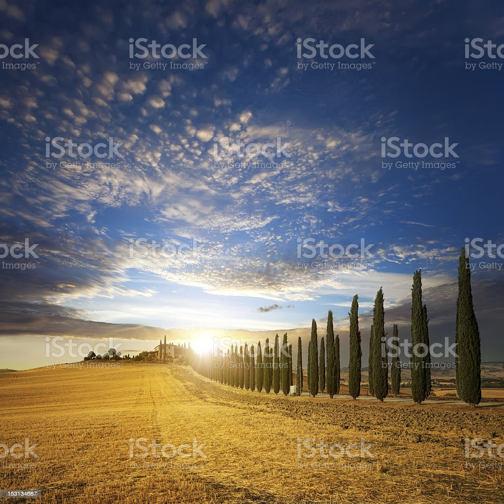 Sunset over golden field and alley of cypress in Tuscany stock photo