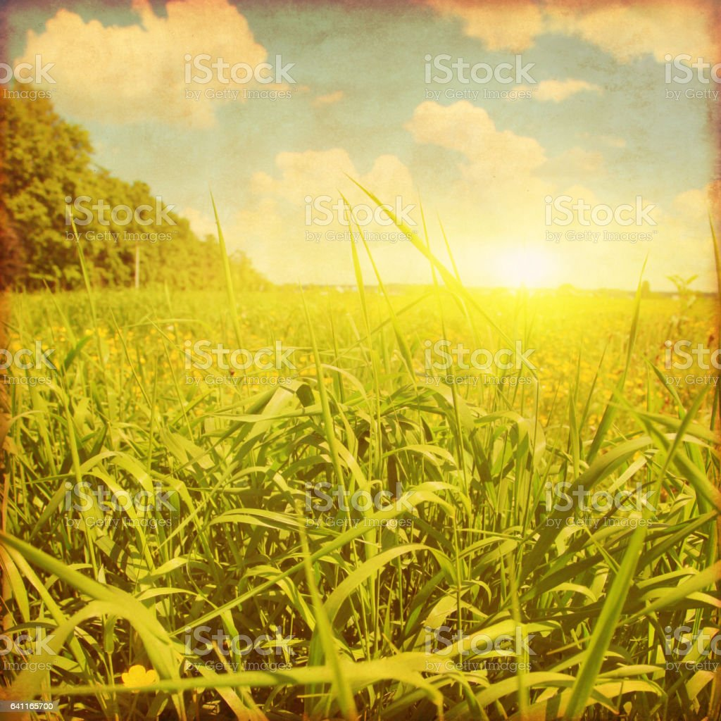 Sunset over grass field. Grunge photo. stock photo