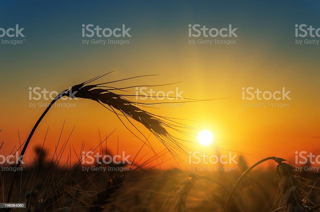 sunset over harvest field stock photo
