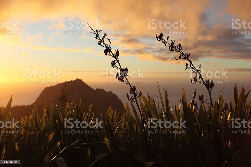 Sunset over High Hill and flax on St Helena Island stock photo