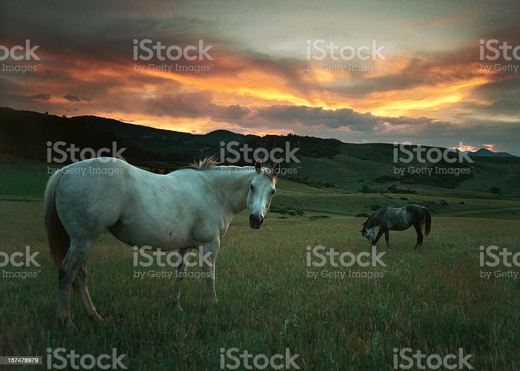 Sunset over horses and hills, Colorado stock photo