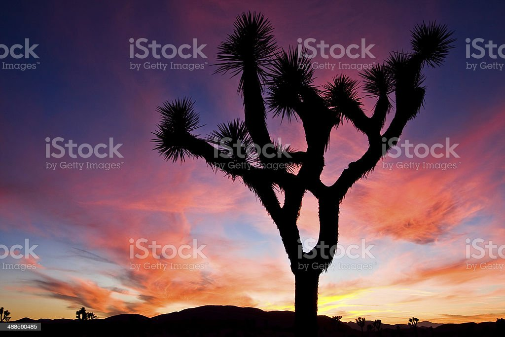 Sunset over Joshua Tree National Park, California, US. stock photo