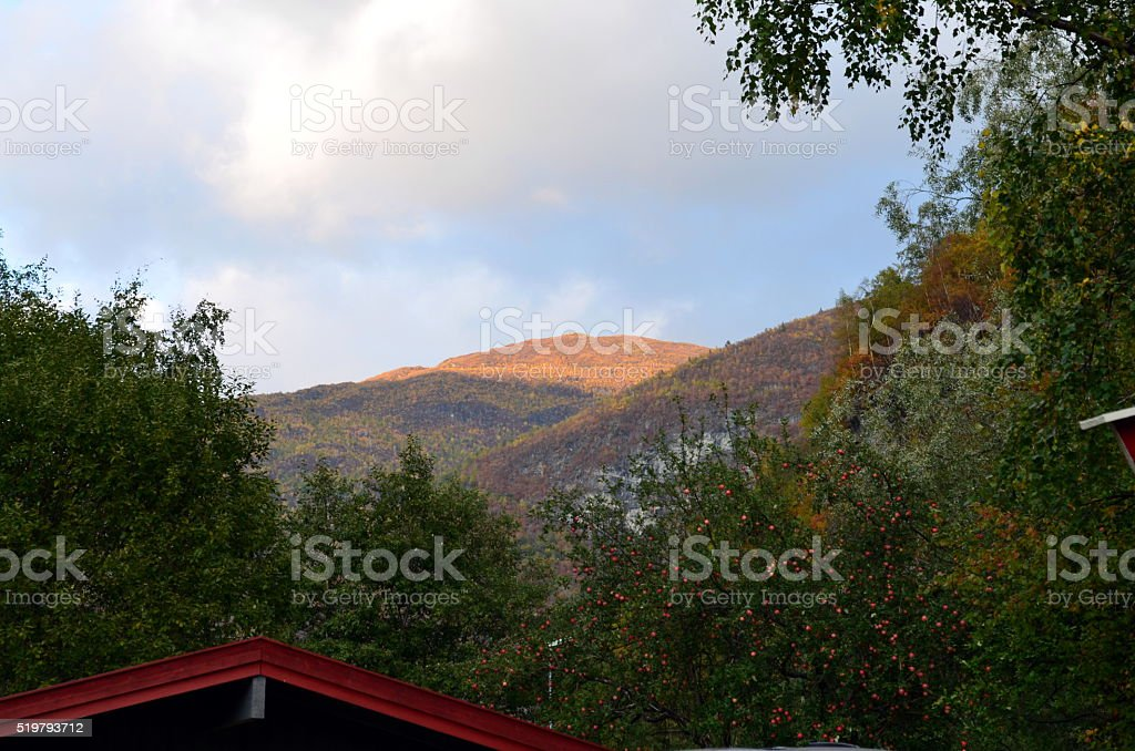 Sunset over mountain with apple tree stock photo