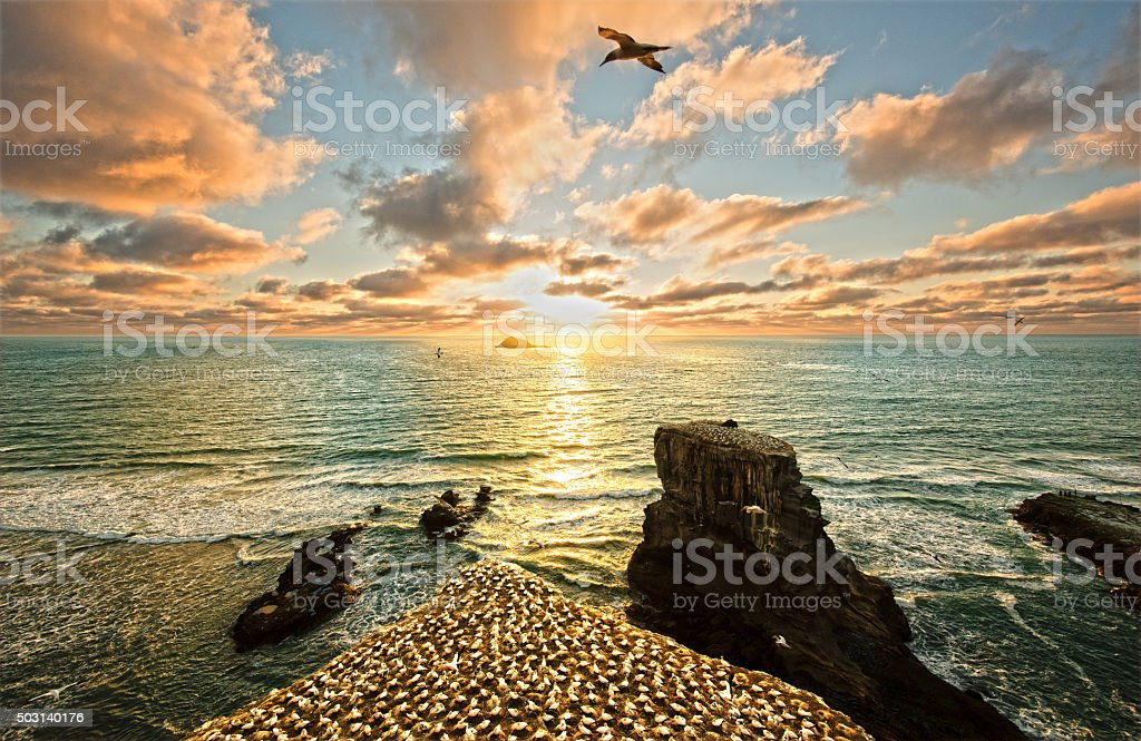 Sunset over Muriwai Beach and Gannet Colony stock photo