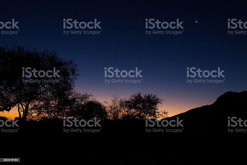 Sunset over Namib Desert with Tree stock photo