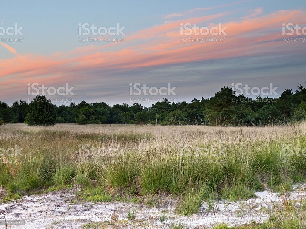 Sunset over Netherlands Nature Reserve stock photo