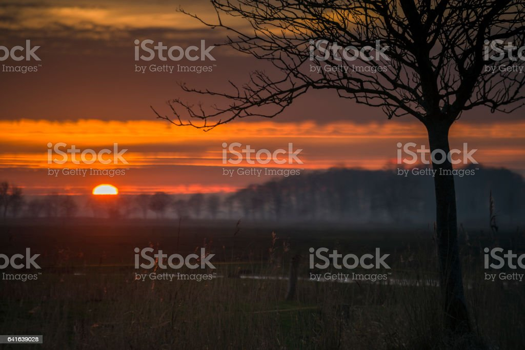 Sunset over pasture with back lit common reed and tree stock photo