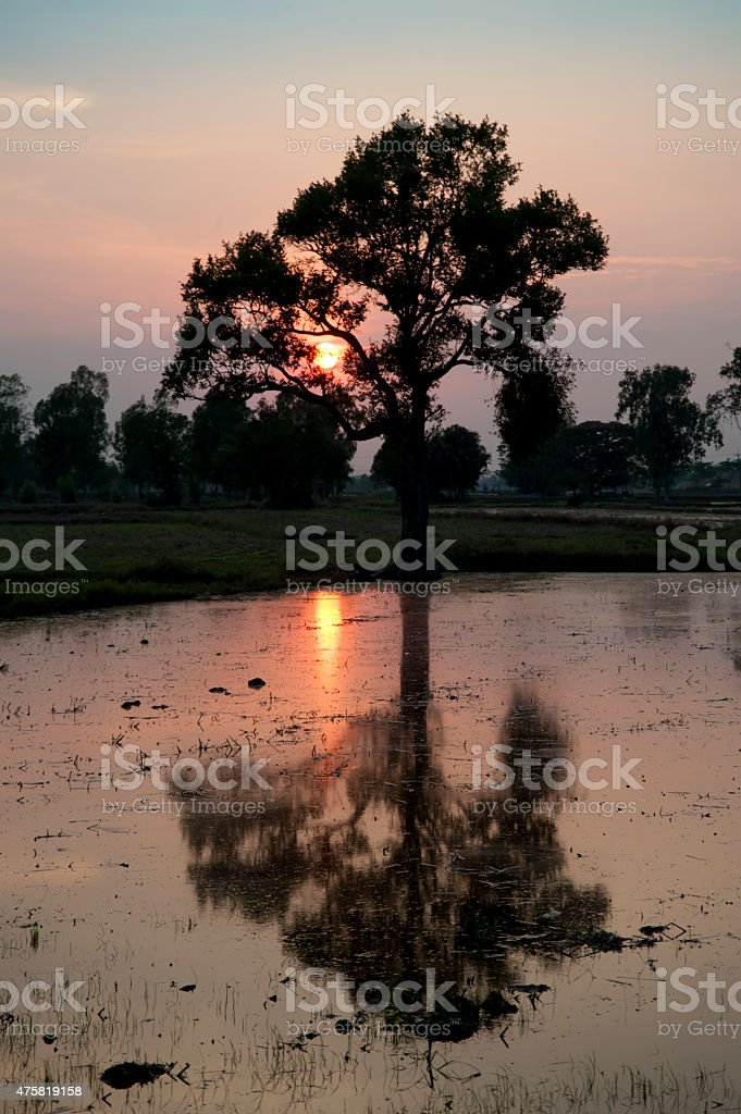 Sunset over rice fields Asia weather patterns. stock photo