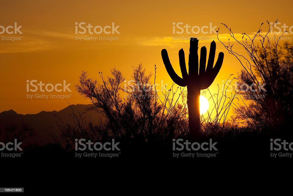 Sunset over Saguaro National Park and Tucson Mountains Arizona royalty-free stock photo