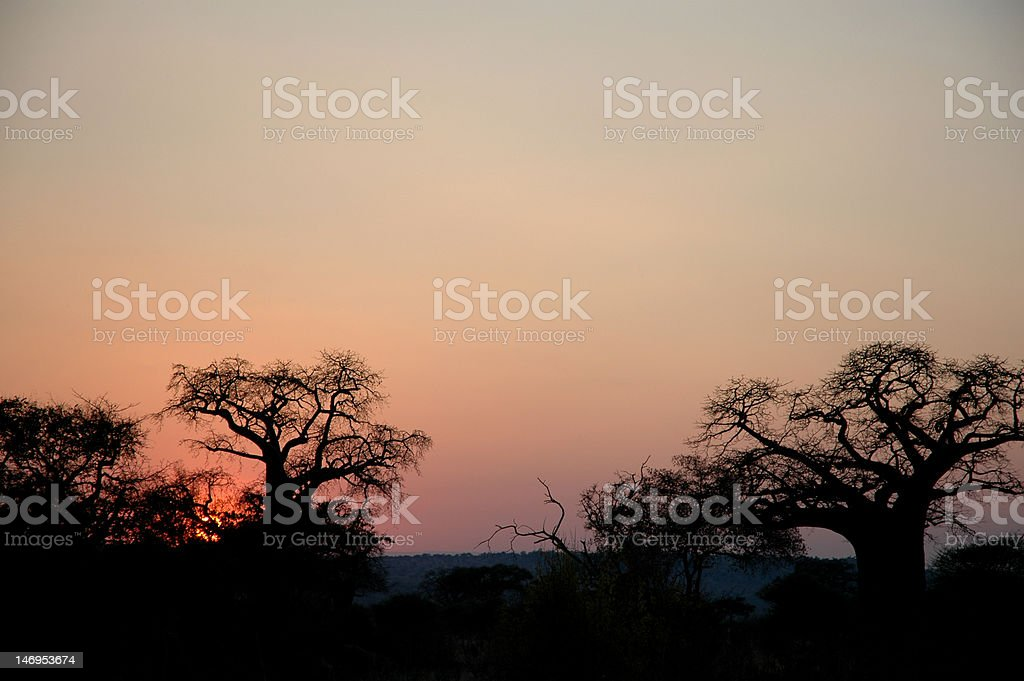 Sunset Over Savannah with Baobab Tree Silhouettes royalty-free stock photo