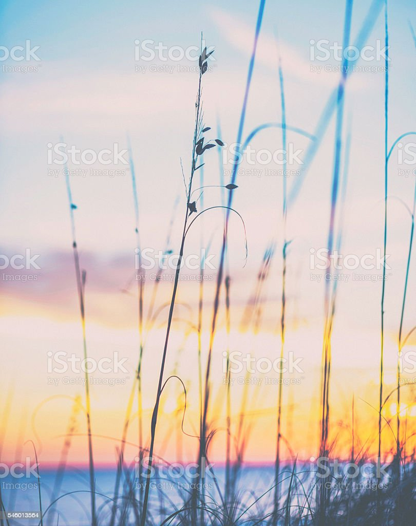 Sunset over the Atlantic ocean with wispy grasses in foreground stock photo