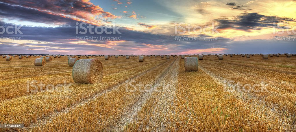 Sunset over the field royalty-free stock photo