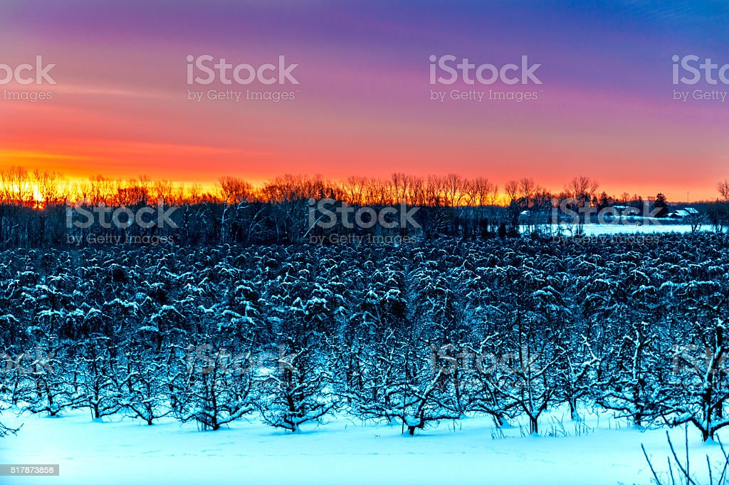 Sunset over the Orchard stock photo