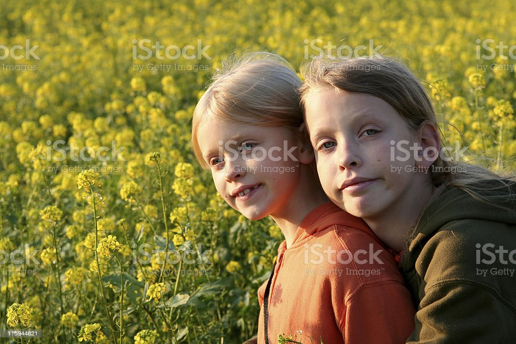 Sunset over the rape field royalty-free stock photo