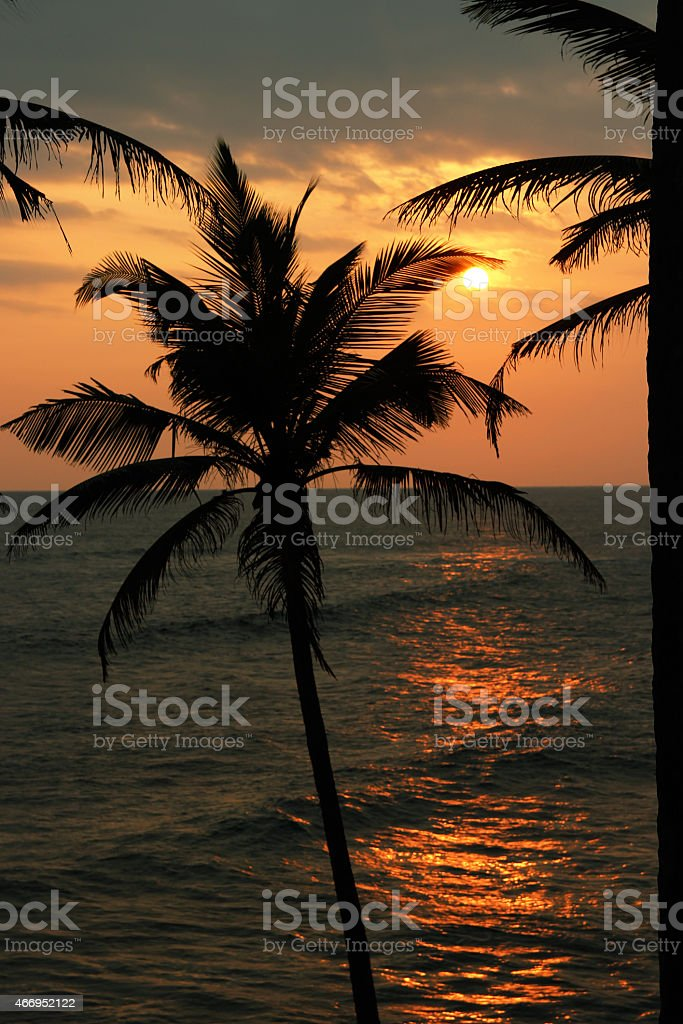sunset over the sea and palm trees silhouettes royalty-free stock photo