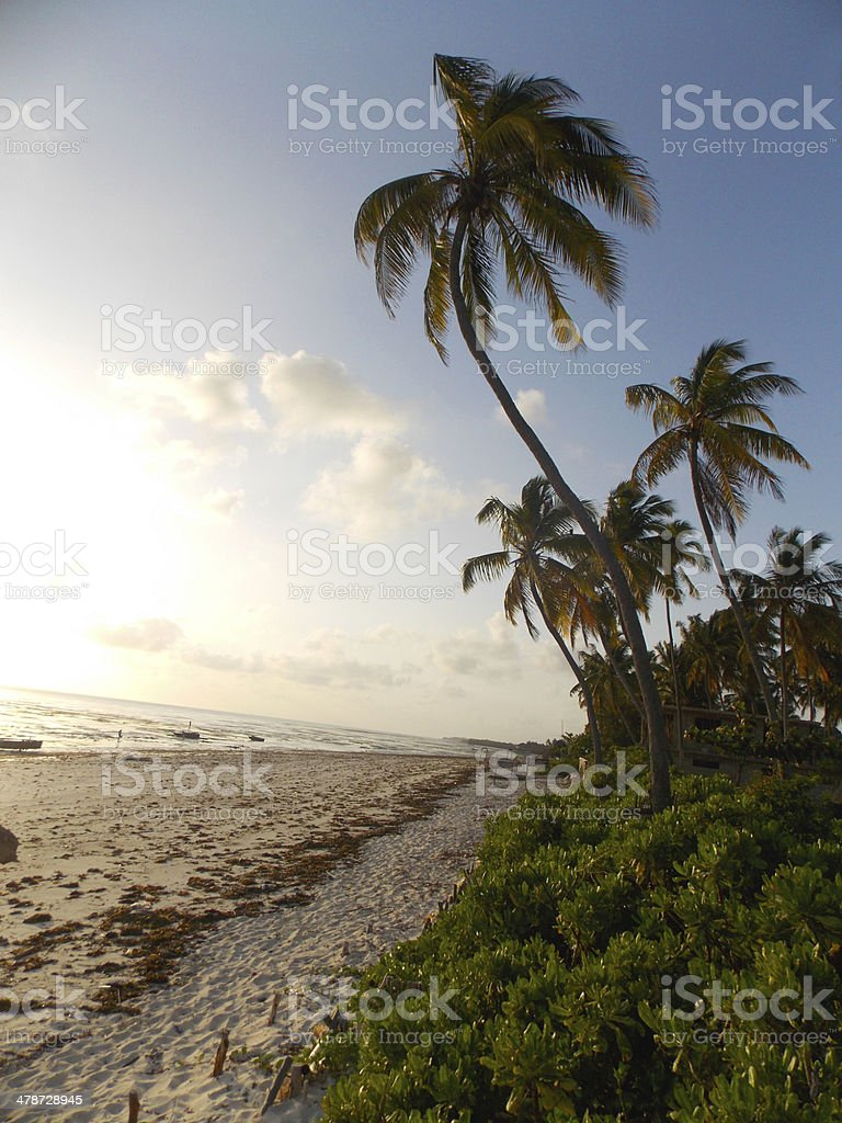 Sunset over the tropical beach Zanzibar, Tanzana. stock photo