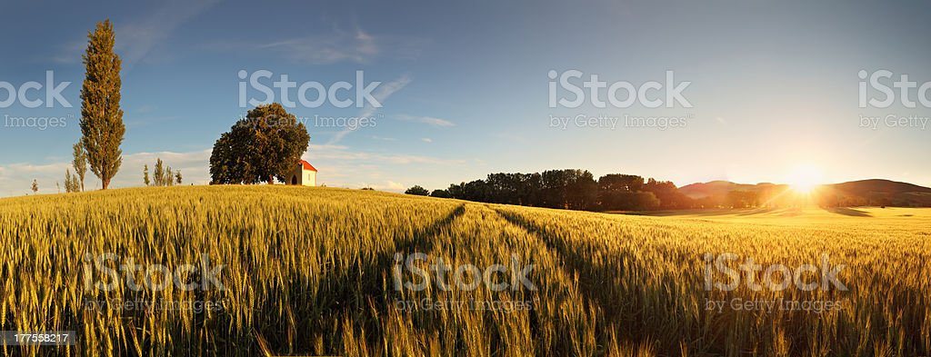 Sunset over wheat field with path and chapel in Slovakia royalty-free stock photo