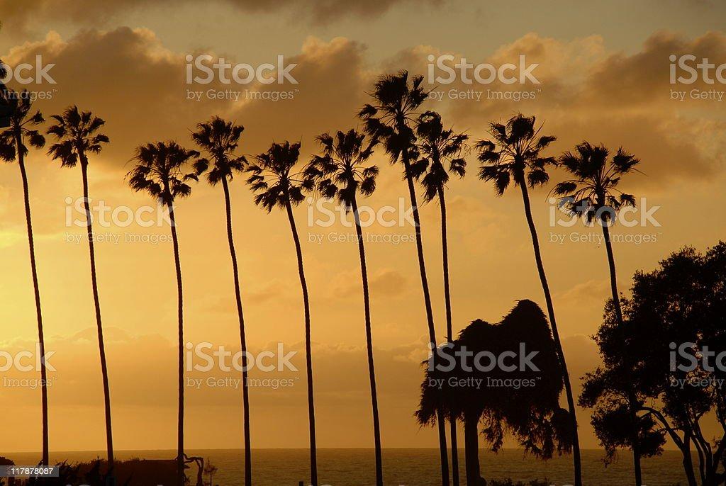 Sunset Palm Trees royalty-free stock photo