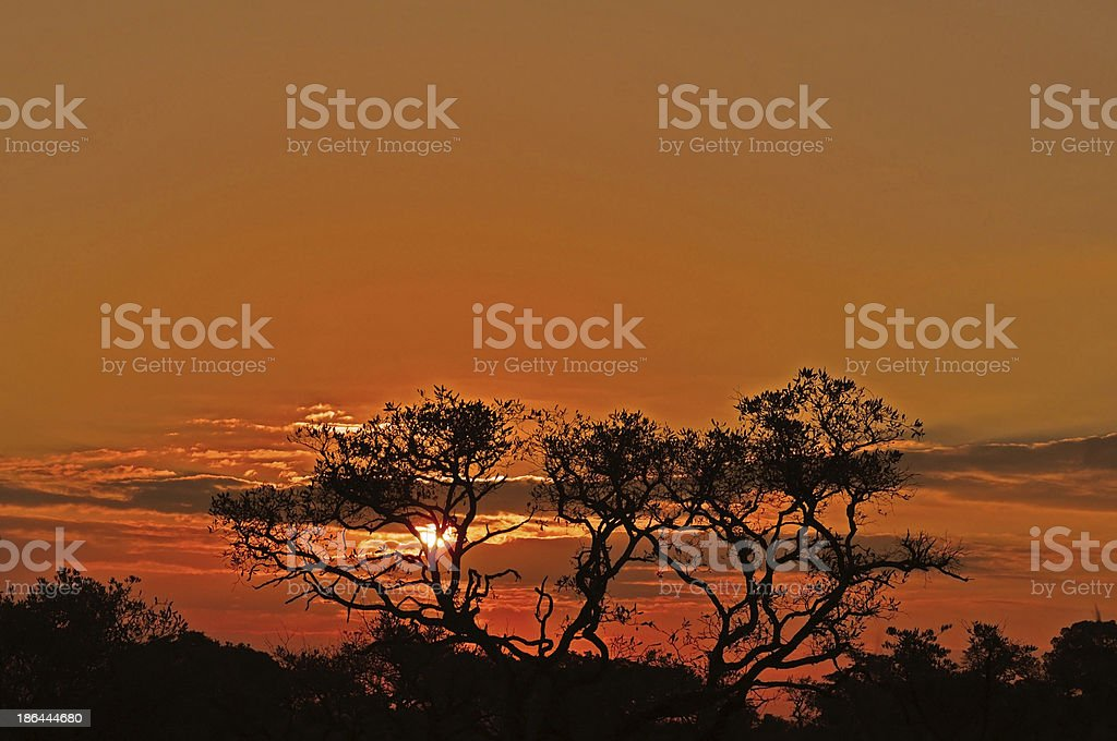 Sunset Palm Trees royalty-free stock photo