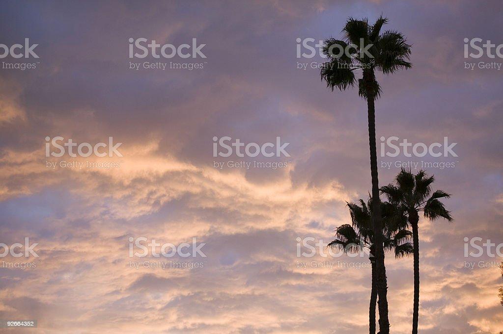 sunset palms#2 royalty-free stock photo