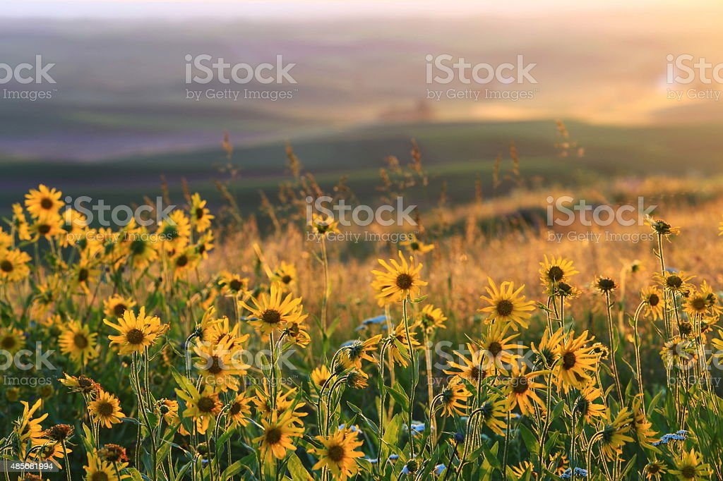 Sunset Palouse stock photo