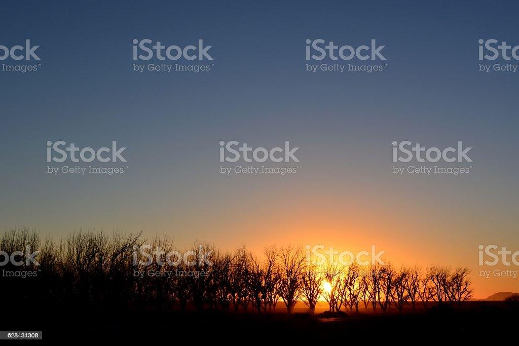 Sunset Pecan Fields stock photo