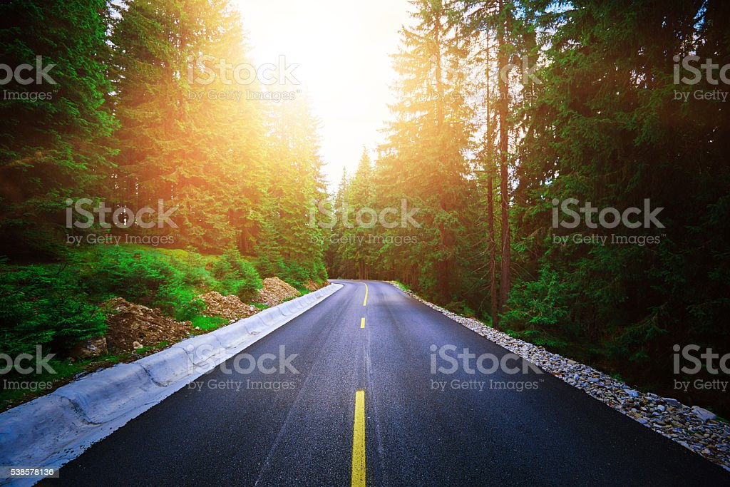 sunset road in the forest stock photo