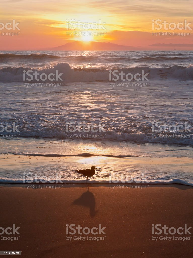 Sunset & Seagull at Hollywood Beach, Southern California stock photo
