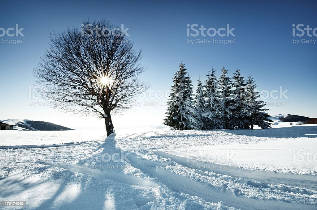 Sunset Shining Through Leafless Tree in Winter royalty-free stock photo