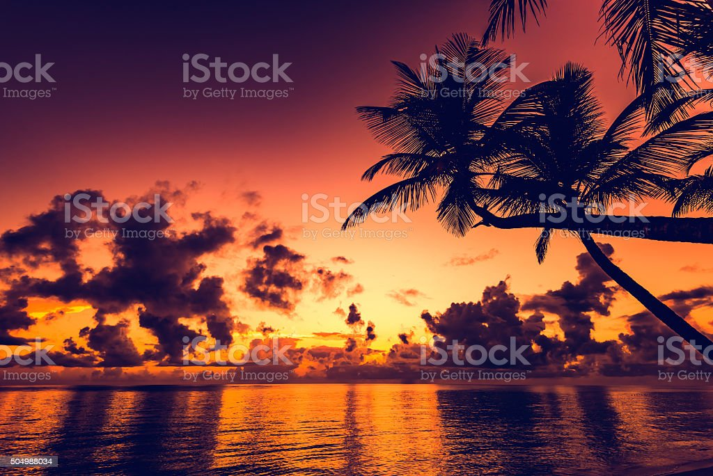 sunset silhouette of palm trees stock photo