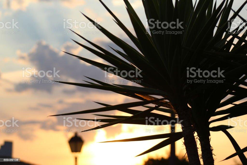 Sunset Silhouette Palm Tree stock photo