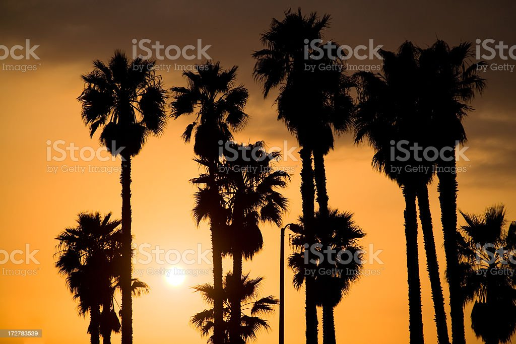 Sunset Silhouette Palm Trees royalty-free stock photo