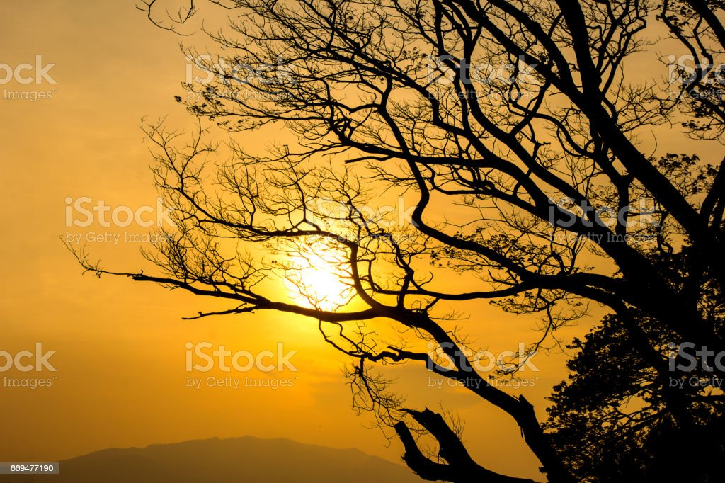 Sunset silhouette with tree. stock photo