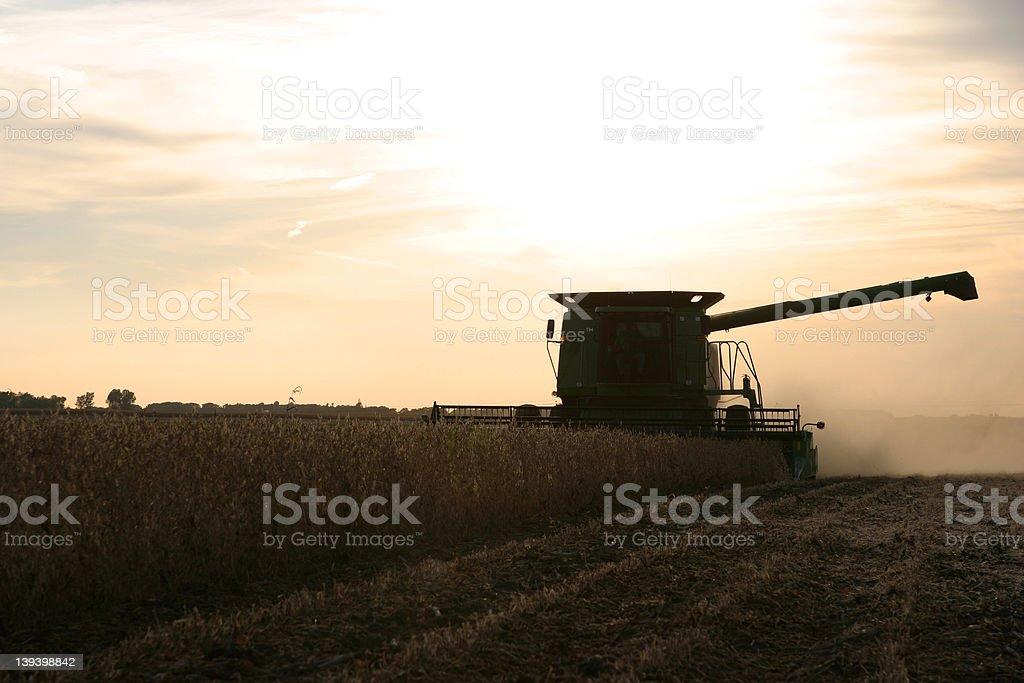 Sunset Soybean Harvest stock photo