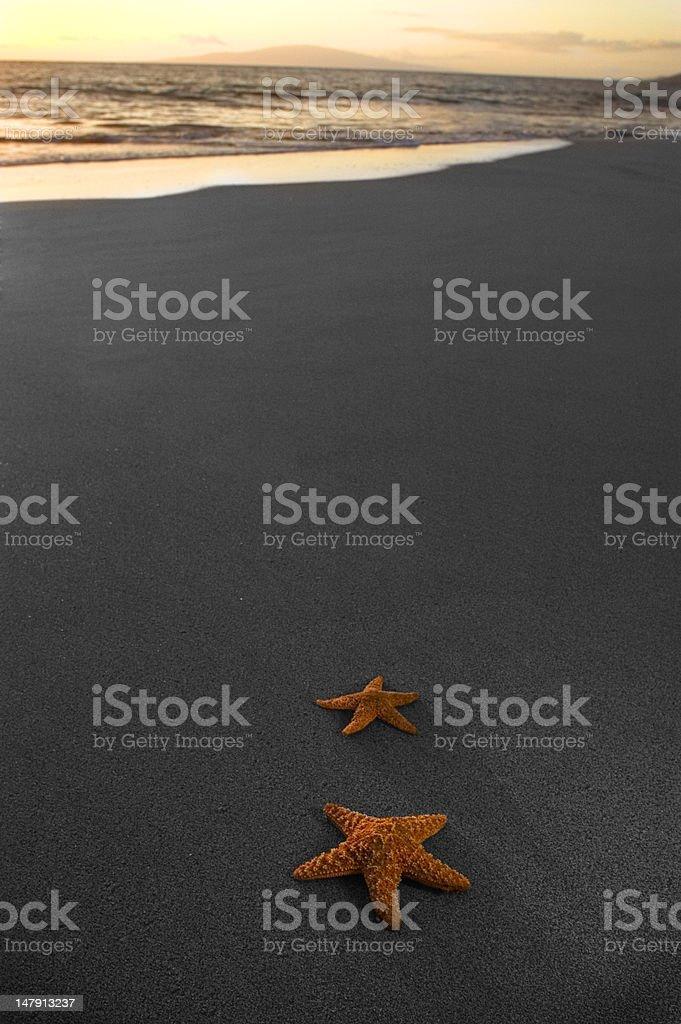 Sunset Starfish royalty-free stock photo