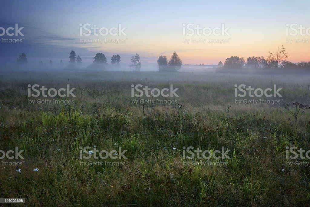 Sunset summer field stock photo