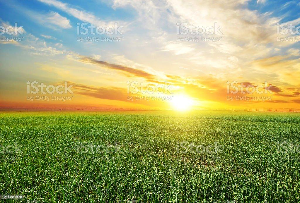Sunset, sunrise, sun over rural countryside wheat field stock photo
