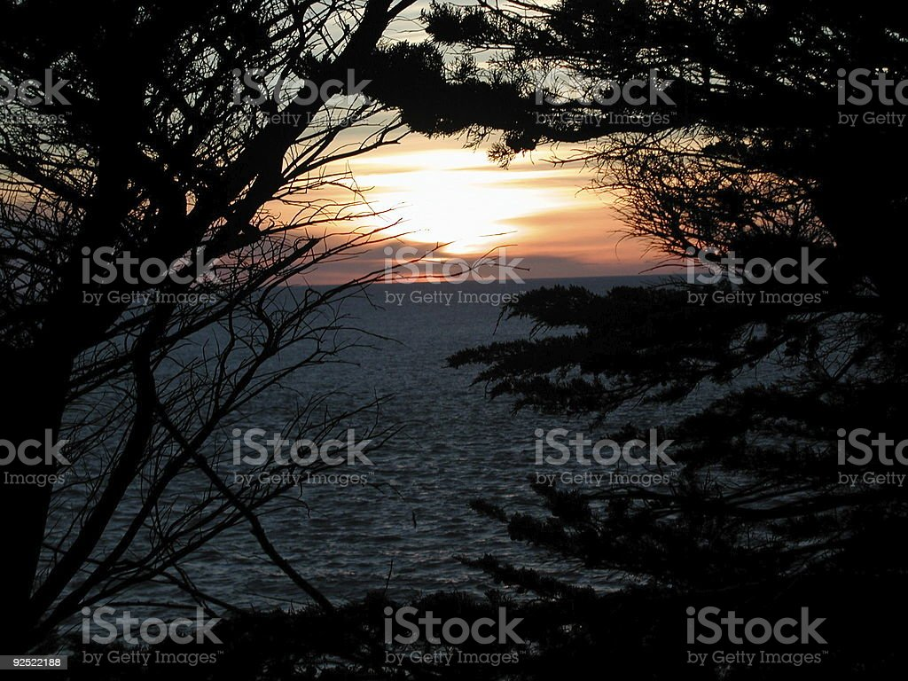 sunset through cypress trees royalty-free stock photo