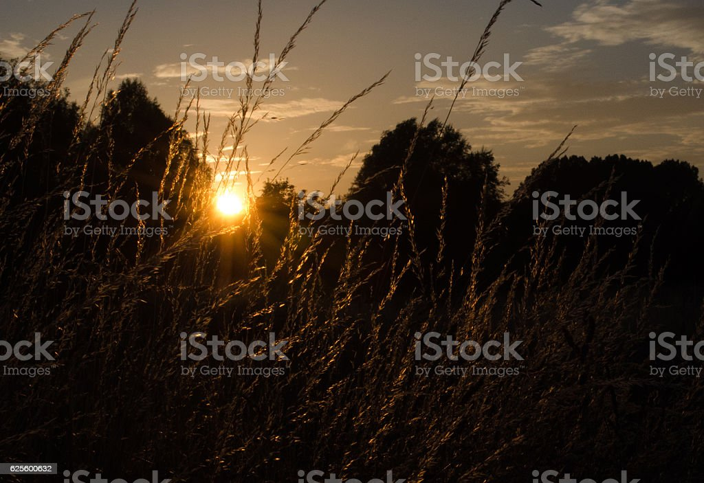 Sunset through meadow grass stock photo