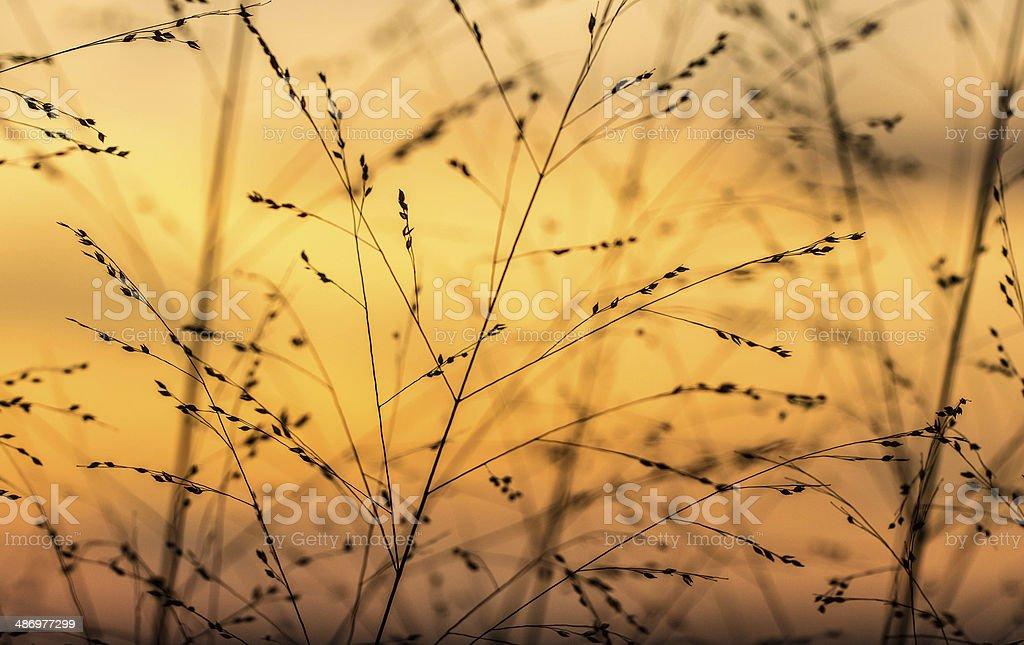 Sunset through the Beach Grass stock photo