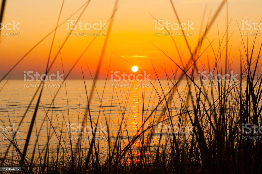 Sunset through the dunegrass stock photo