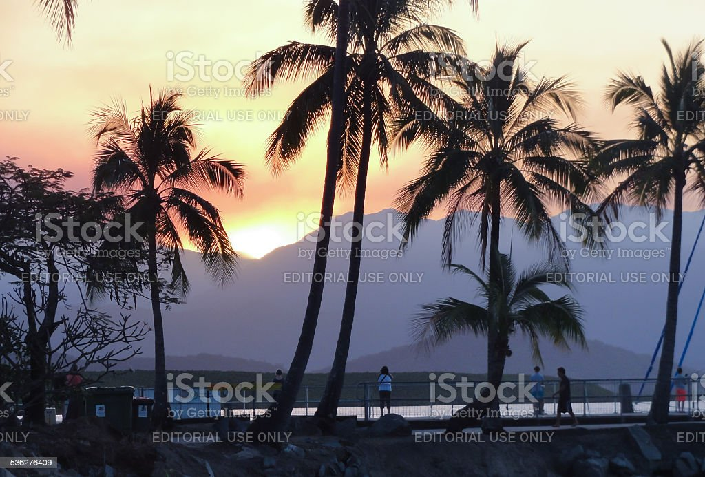 Sunset through the Palms stock photo