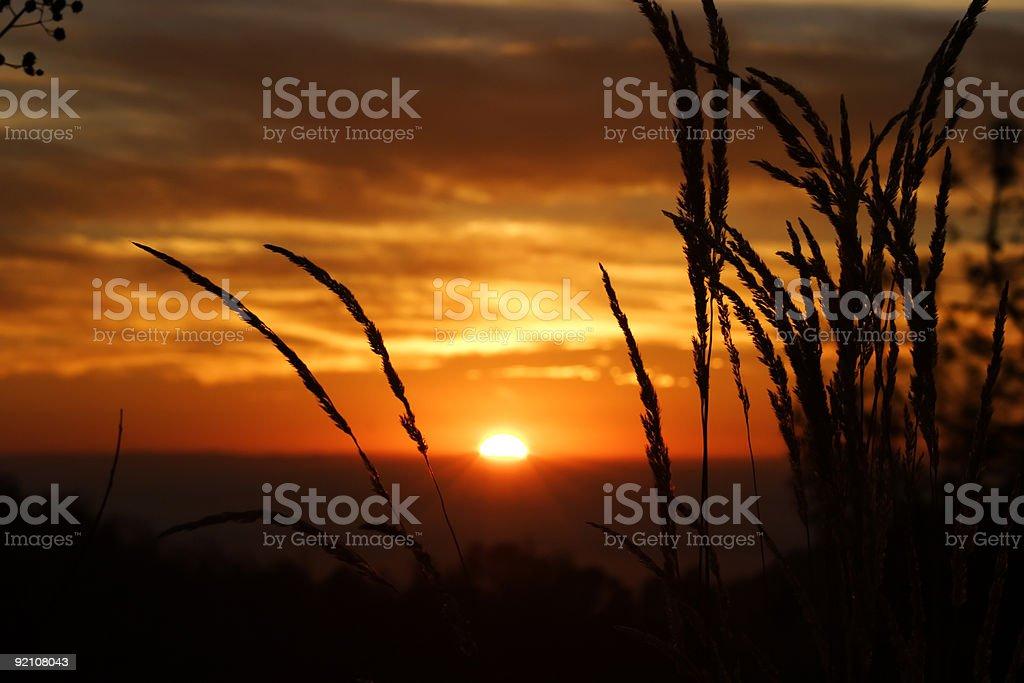 Sunset through the weeds stock photo