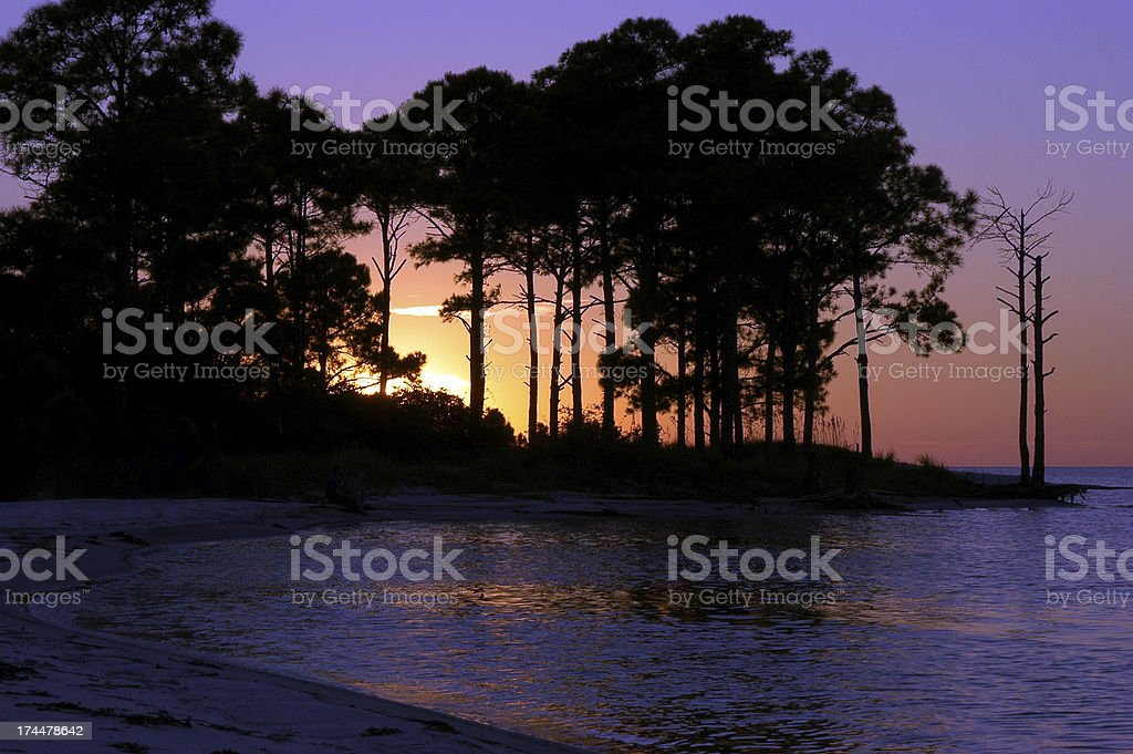 Sunset Through Trees royalty-free stock photo