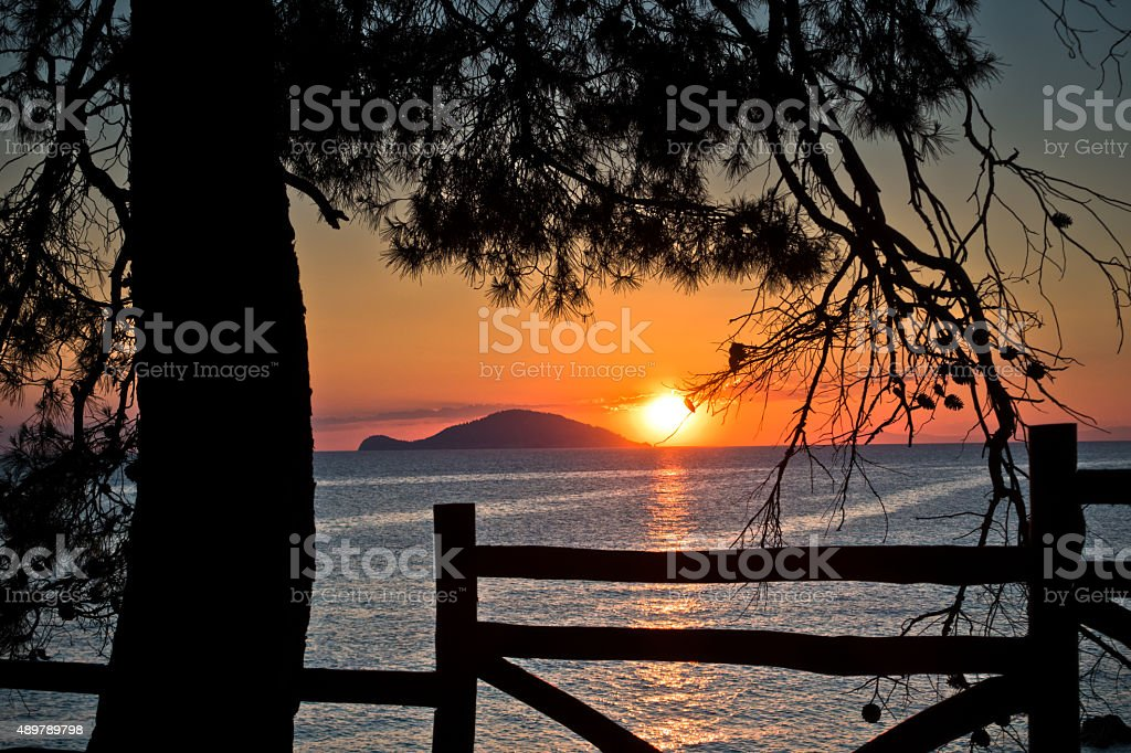 Sunset through wooden fence below pine trees in Sithonia stock photo