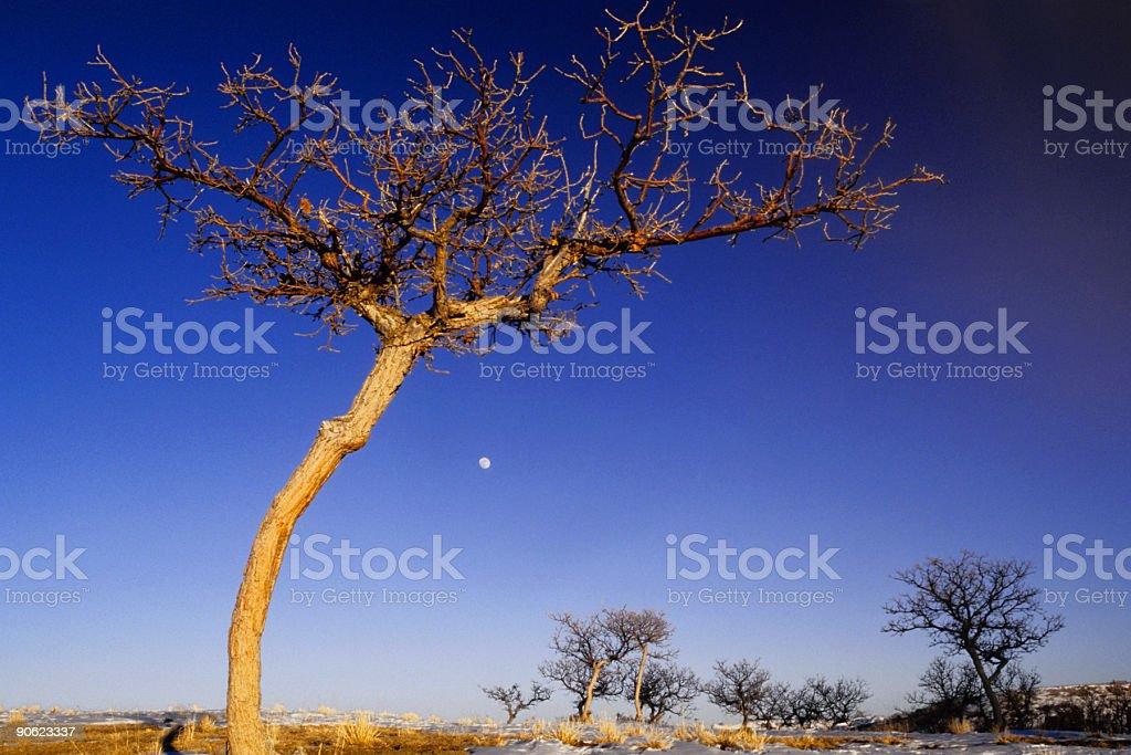 sunset tree and moonrise stock photo